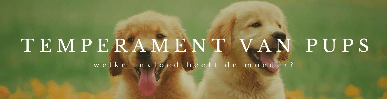 Temperament van pups wordt beïnvloed door zorg moeder