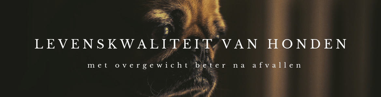 Levenskwaliteit van honden met overgewicht beter na afvallen