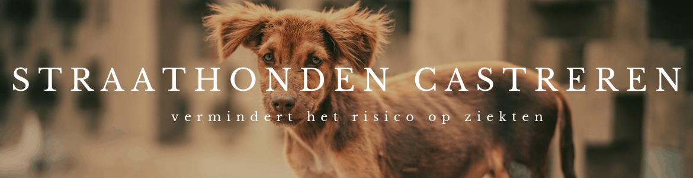 straathonden castreren