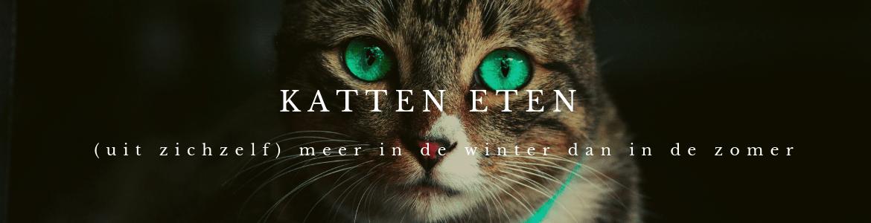 Katten eten uit zichzelf meer in de winter dan in de zomer