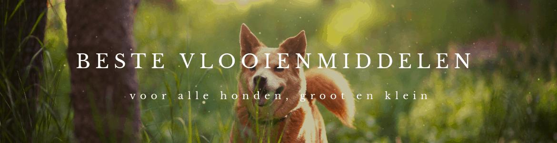 beste vlooienmiddelen voor honden